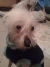 http://www.lostdog.ru/images/pets/4273_4986_t.jpg
