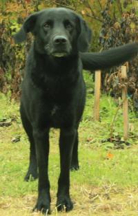 http://www.lostdog.ru/images/pets/5227_5965_t.jpg